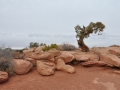 treeatarches.jpg
